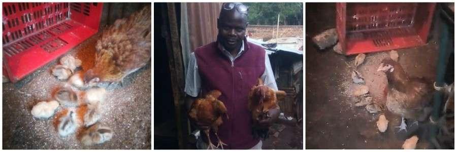 Chickens Kibera Slum Kenya banner